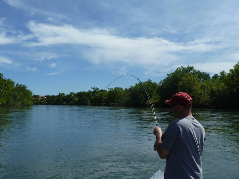 lower sacramento river fly fishing guide