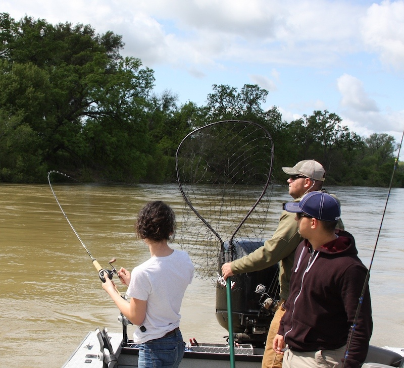 sacramento river striper fishing guide