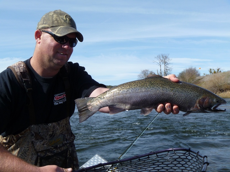 fly fishing guide lower sacramento river jason thatcher