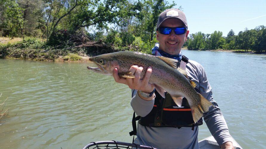 sacramento river wild trout