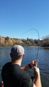 large trout hooked up on the sacramento river