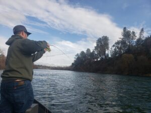 hooked up to a sacramento river trout