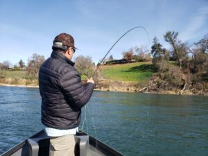 fly fishing for sacramento river trout