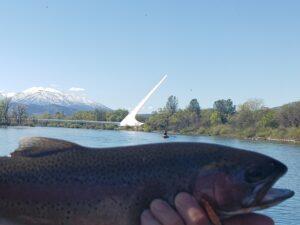 lower sacramento river trout fishing sundial bridge redding CA