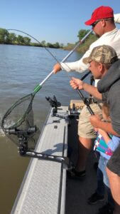 netting a striper on the sacramento river