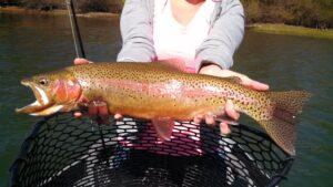 large sacramento river trout